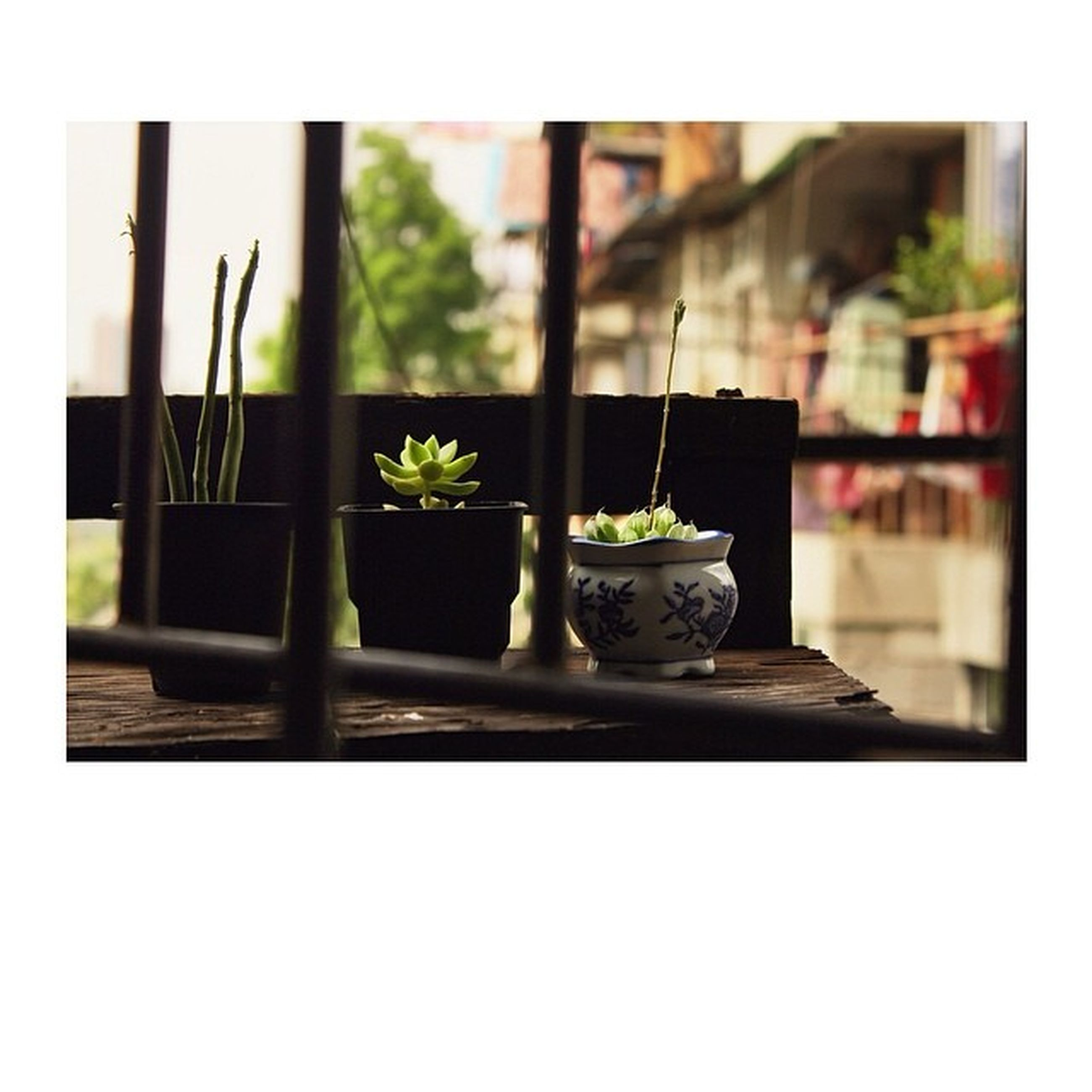 transfer print, potted plant, auto post production filter, indoors, plant, flower, growth, window sill, vase, window, flower pot, glass - material, close-up, focus on foreground, day, table, freshness, home interior, no people, sunlight