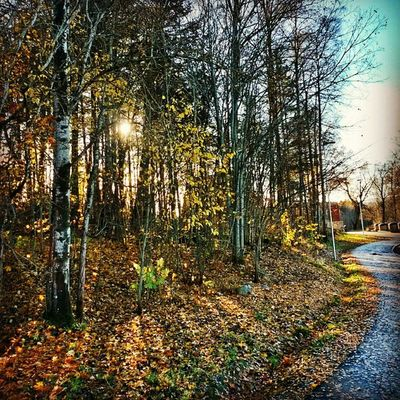 Ilovenorway Ilovenorway_akershus Follo   ås pentagon umb worldunion wu_norway autumn høst hdr ic_trees ig_week_autumn ig_week