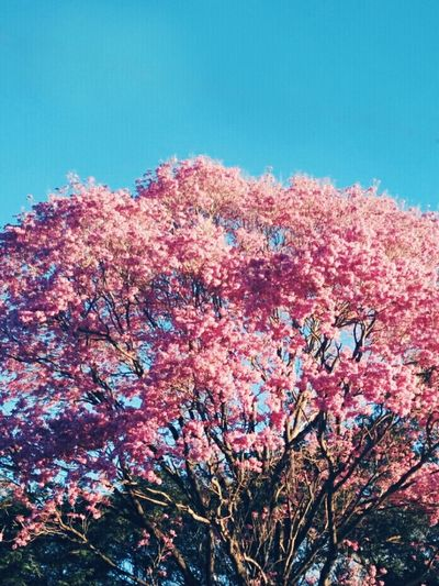 Flower Pink Color Sky Outdoors Nature