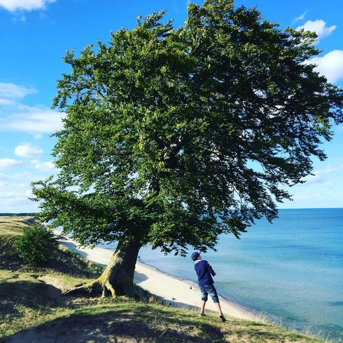 Rear view of boy standing by tree trunk at beach