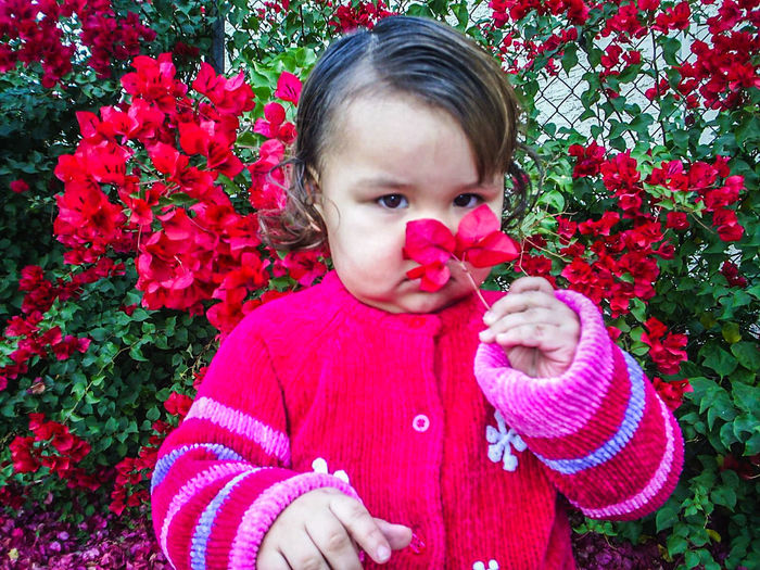 Portrait of cute girl holding pink flower