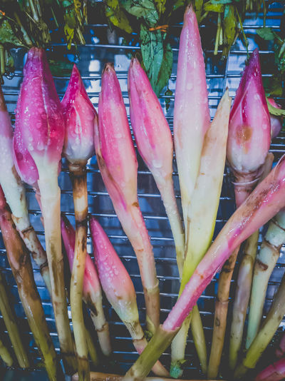 Food And Drink Seafood Food Healthy Eating Market Freshness For Sale Market Stall Raw Food Healthy Lifestyle Close-up Torch Ginger Torch Ginger Flower Bunga Kantan Etlingera Elatior Ginger Flower Red Ginger Lily Torch Lily Combrang Wax Flower Asian  ASIA Spring Blossom Aroma