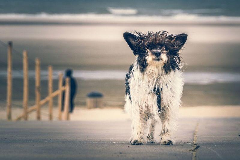 Close-up of dog on beach