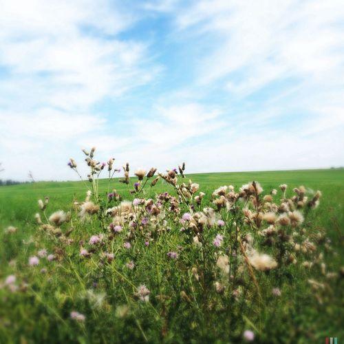 NEM Landscapes Fields Canada