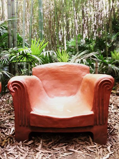 Tree Armchair Plant Chair No People Day Furniture Outdoors Nature France Anduze Cevennes France Bamboo Forest Bamboo