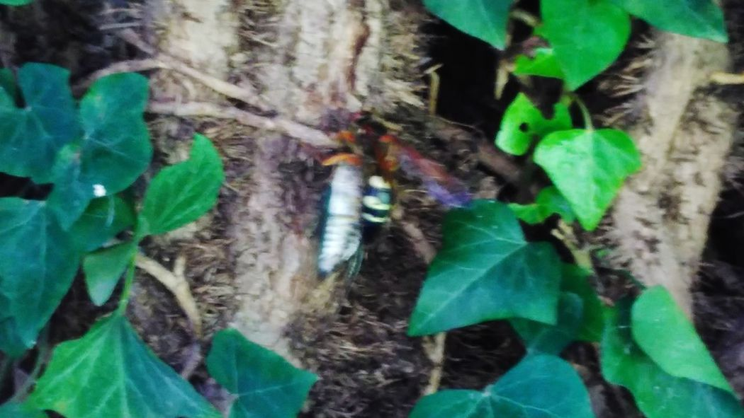 Green Color Close-up Outdoors Insects  Dinner Time Full Frame Nature Hornets Meal Hornet Strength Strength And Mind Set Strenght Of Nature