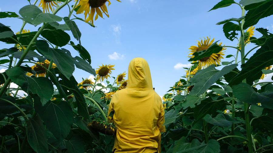 Rear view of woman with sunflower against sky