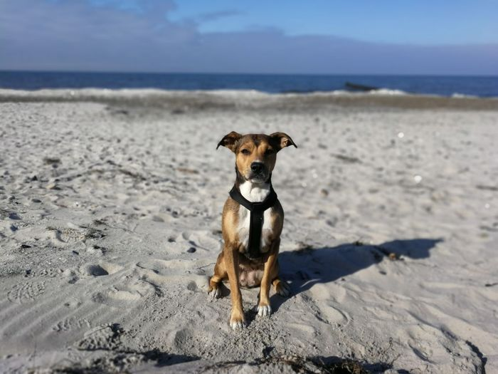 Pets Water Sea Portrait Beach Dog Sand Looking At Camera Summer Wave Mixed-breed Dog Horizon Over Water Calm Seascape Coast Ocean