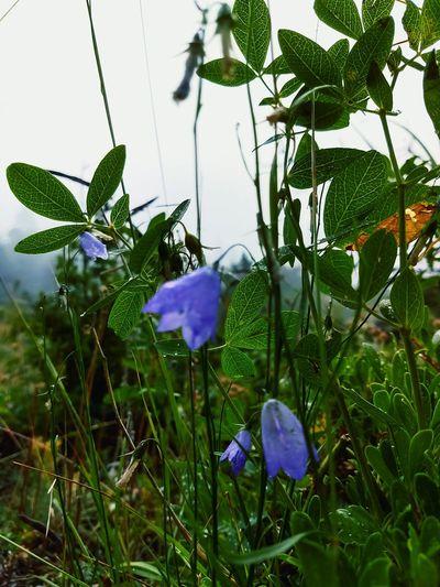 Fog Dew Morning Leaf Vein Vedauwoo Wyoming Flower Head Flower Leaf Water Tree Petal Close-up Plant Green Color First Eyeem Photo Blooming Dew