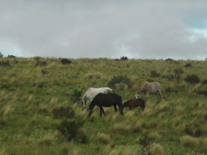 Horses Horsesofinstagram