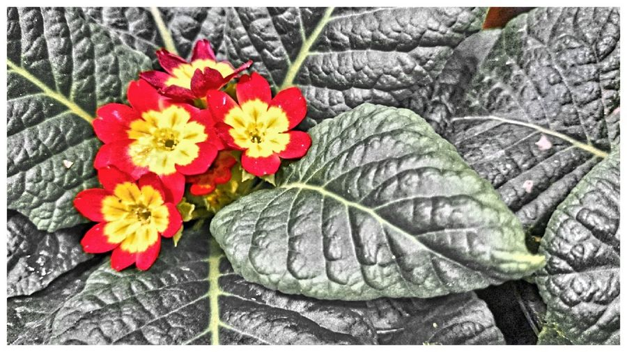 Nature Flowers Xperia Z2
