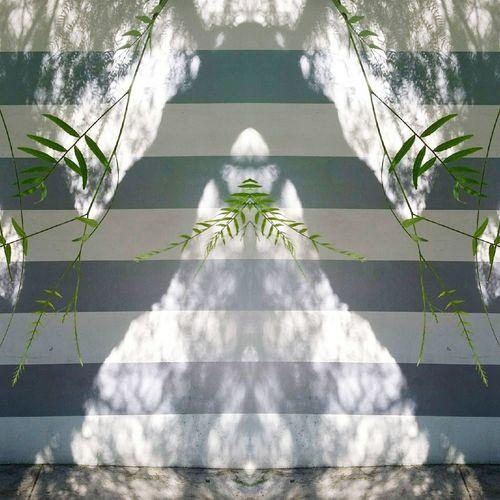 Fugue State 3 Tree Street City Los Angeles, California Surreal Surrealism Mirrorimage Surrealist Art EyeEm Selects Shadow Shadows & Lights Shadows On The Wall Shadow Photography Streetphotography Leaves Foliage Spirits Tree Plant Life Mysterious The Creative - 2018 EyeEm Awards