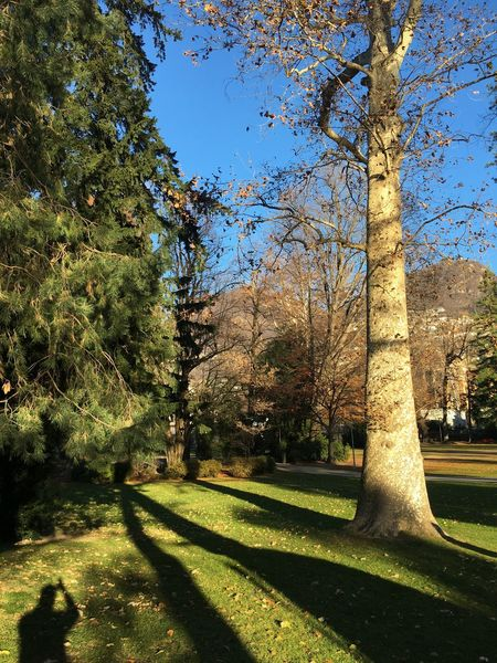 Tree Growth Nature Beauty In Nature Grass Green Color Shadow Sunlight Tranquility Tranquil Scene Day No People Scenics Landscape Outdoors Switzerland Autumn Crisp Lugano Beautifulday Park Tree