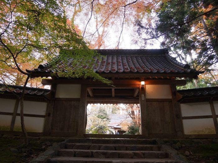 Autum Temple -