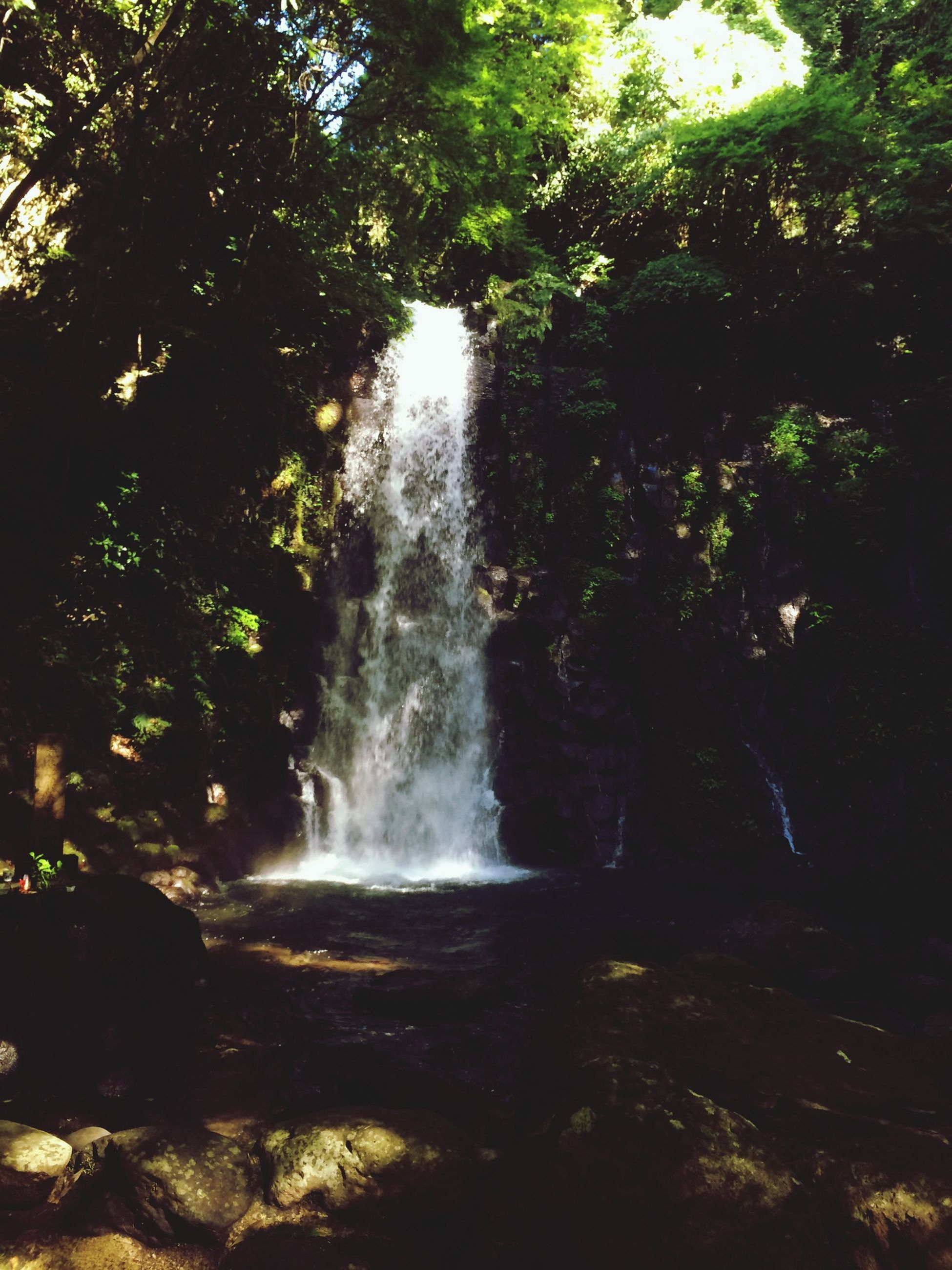 waterfall, motion, water, flowing water, long exposure, tree, flowing, nature, beauty in nature, splashing, forest, rock - object, growth, scenics, blurred motion, plant, low angle view, outdoors, day, no people