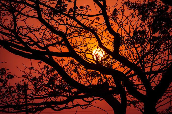 Wildlife & Nature Sky Sunset Silhouette Beauty In Nature Outdoors Orange Orange Sky Tree Tranquil Scene Outdoors EyeEmNewHere