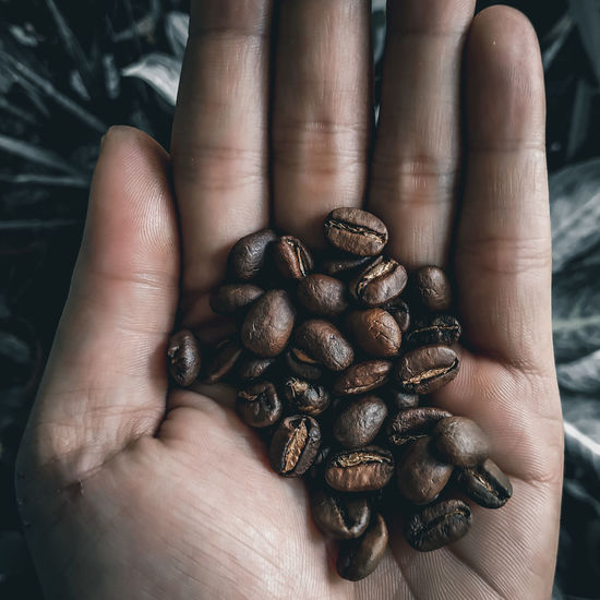 Close-up of hand holding coffee beans