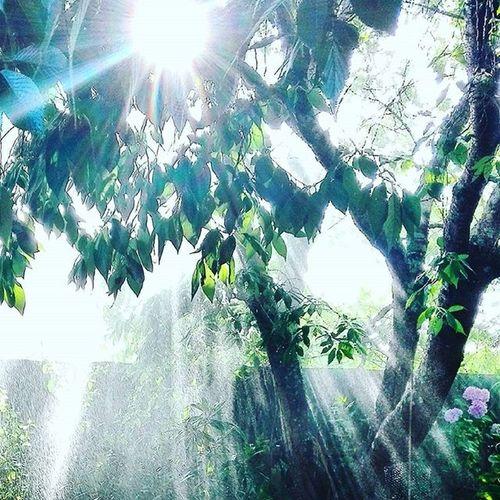 As_archive Rebelsunited_nature Rsa_nature Ig_masterpiece Tt_rt_nature Universalviews Natureromantix Ig_globalclub Pocket_trees Natureromantix Tt_rt_nature Rebelsunited_nature Birds_bees_flowers_n_trees Rsa_nature Rsa_trees Global_nature_greens_december Universalviews Ig_masterpiece Sunrays Mistymorning Mist Sunlight
