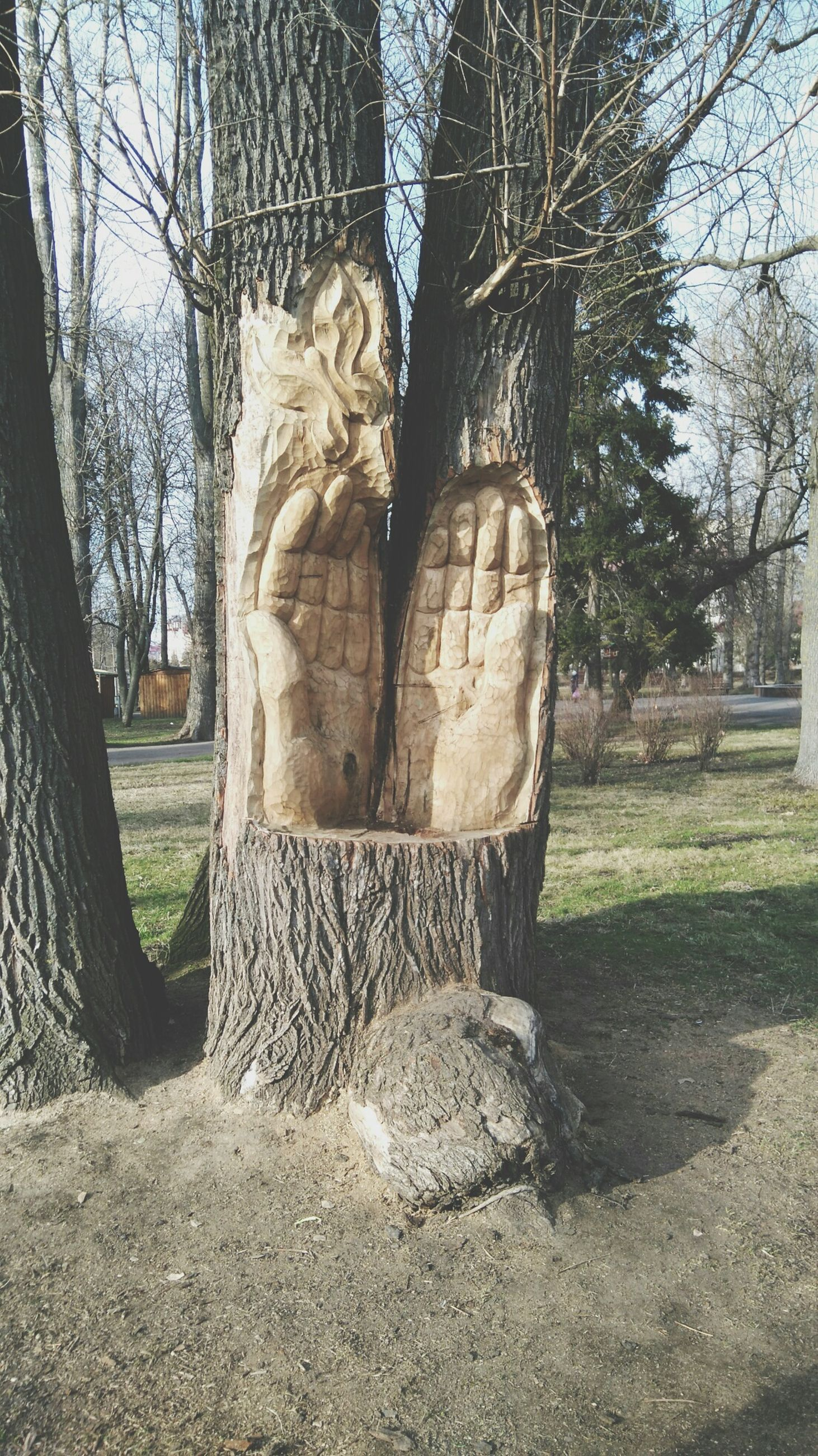 tree, art and craft, art, statue, sculpture, creativity, human representation, tree trunk, bare tree, branch, sunlight, day, park - man made space, animal representation, nature, shadow, outdoors, no people