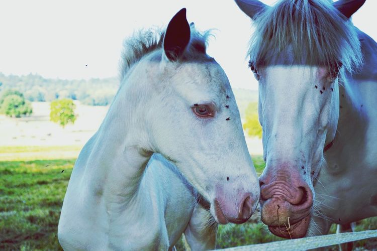 Horse's Pets Togetherness Dog Friendship Water Close-up Horse Two Animals Paddock Horse Cart