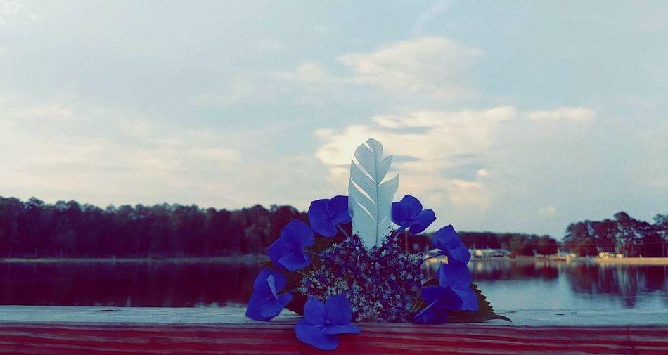 adventure with nature Nature Outside Photography Flowersandfeathers Whitefeathers Blueflowers Lakeveiw Peerscene Tree Sky
