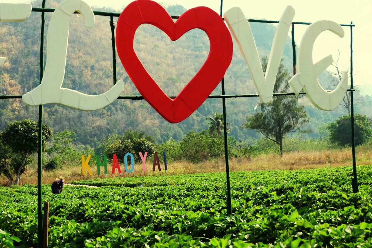 heart shape, love, day, tree, outdoors, nature, real people