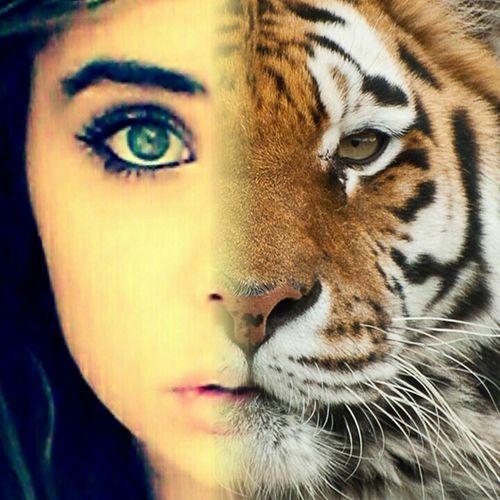 Tiger Face Meowstagram Roarin'