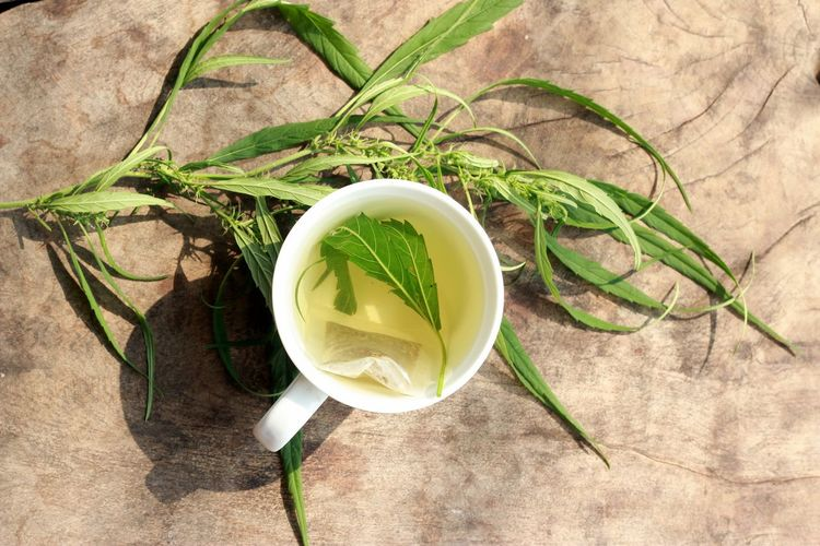 Hot tea and hemp, cannabis on the wooden background Cannabis Close-up Day Drink Drinking Elevated View Food Food And Drink Foodphotography Freshness Green Green Color Growth Hemp Hemp Fest Leaf Nature No People Plant Still Life Wood Wooden Wooden Background