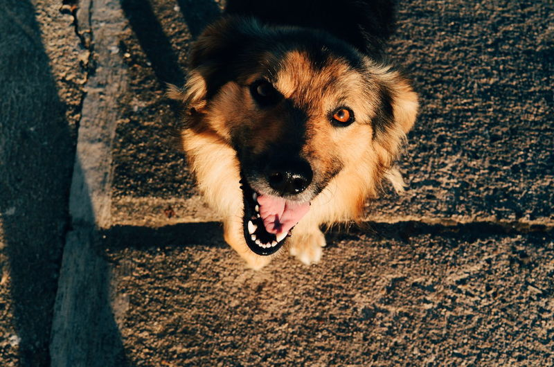Woof! Dog One Animal Pets Mouth Open Domestic Animals Outdoors Protruding Mammal Animal Themes Animal Yawning Sunlight Sticking Out Tongue Animal Tongue Day No People Panting Nature Portrait German Shepherd