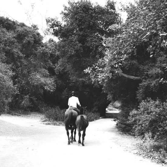 One Animal Horse Country Road EyeEm Gallery People People Watching Check This Out Blackandwhite