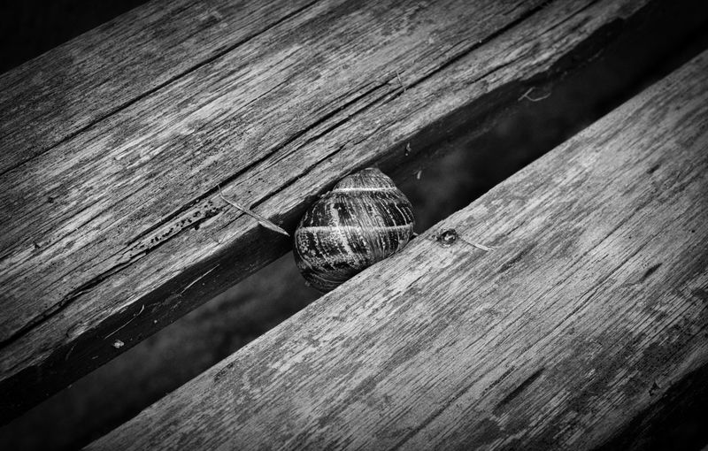 Trapped Snail