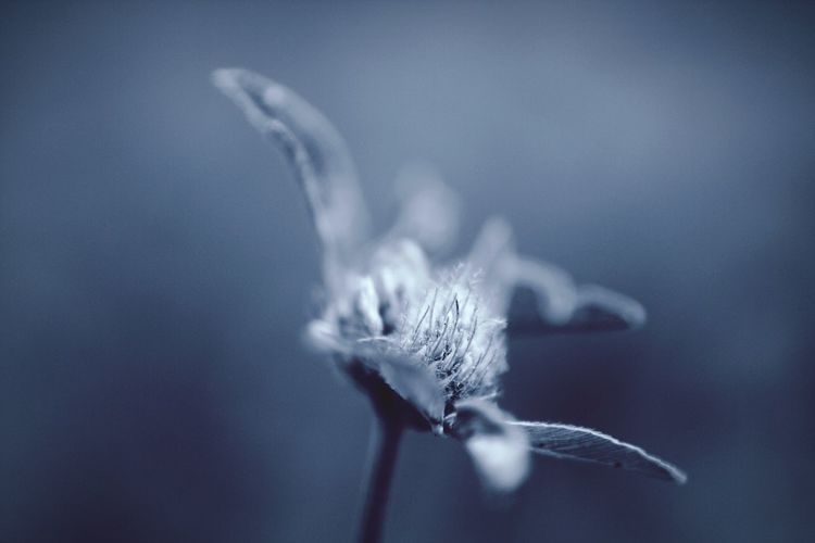 Abstraction Abstraction In Nature monochrome photography Monochrome Flower Abstraction Water Nature Blue