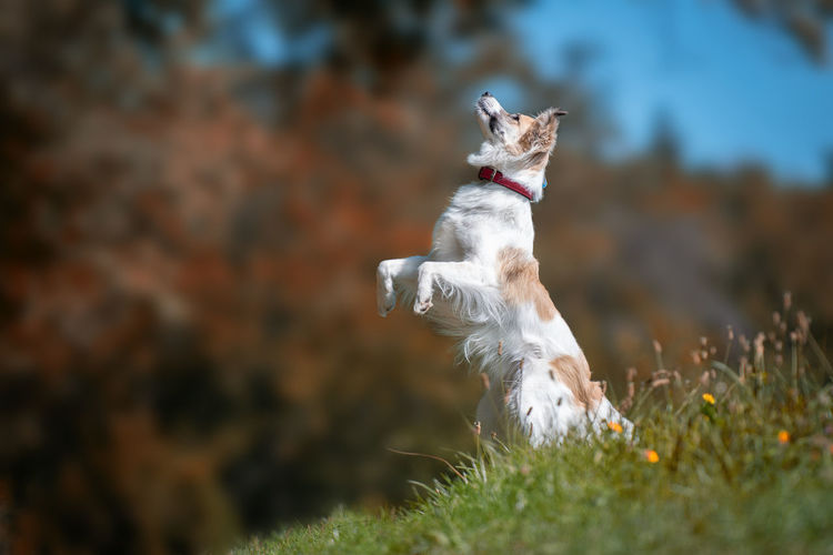 Dog standing on grass