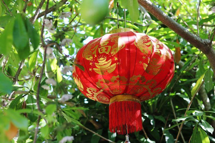 Close-up of red lanterns hanging on tree