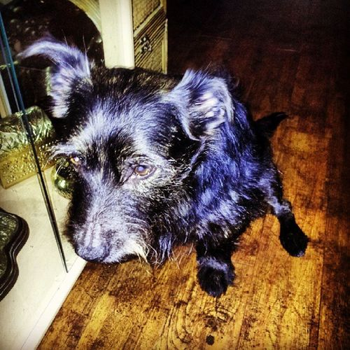 Loyal old Snoop. Love him. Snoopdogg Dog