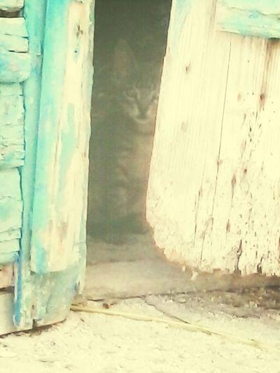 kitty in the shadows Schattenspiel