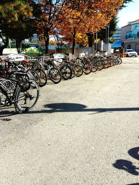 Bike Mode Of Transport Sunlight Transportation Land Vehicle Outdoors No People Day Bicycle Rack Tree City Bicycle