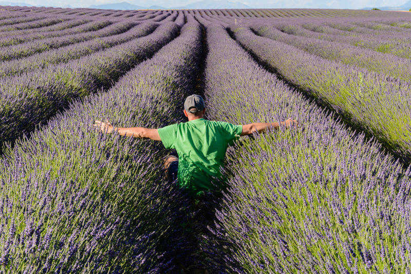 Rear view of man with arms outstretched sitting on lavender field