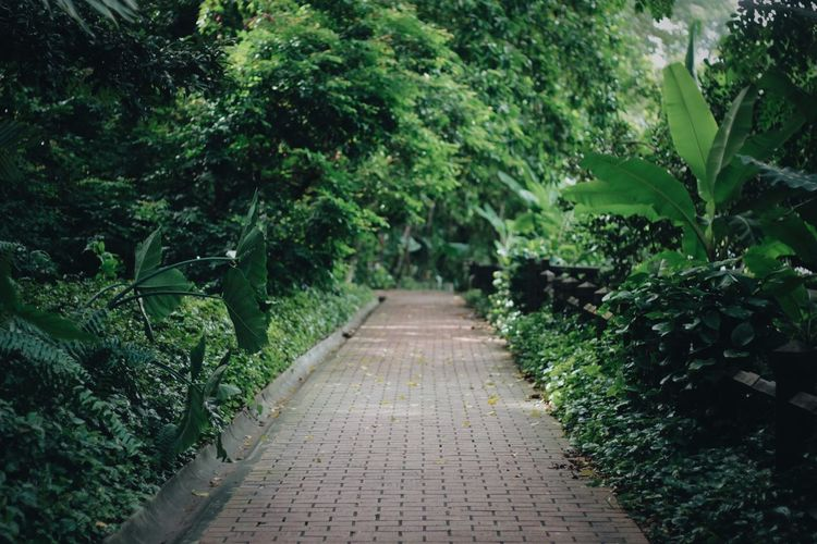 Empty footpath amidst plants in park
