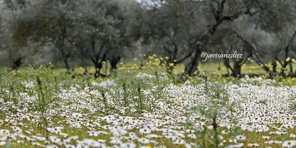 Eclosión primaveral en el #destinorural Spring Destinorural Aracena Movilgrafias #entraenmilimbo