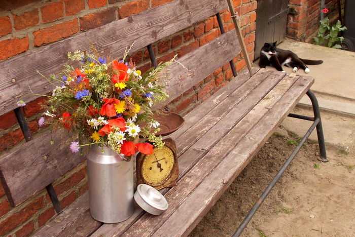 Beauty In Nature Blooming Cat Close-up Day Flower Flower Pot Fragility Freshness Front Or Back Yard Growth In Bloom Kitchen Scale Milk Churn Nature No People Old Kitchen Scale Outdoors Petal Pink Color Plant Potted Plant Wood Wood - Material Wooden