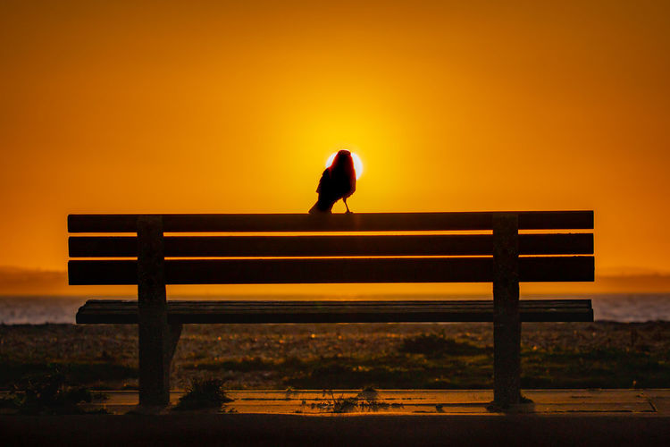 End of day Sunset Sky Bench Silhouette Seat Full Length Solitude Nature Orange Color Sitting Outdoors Standing Scenics - Nature Relaxation Wood - Material Tranquil Scene Crow Bench Jason Gines Beach