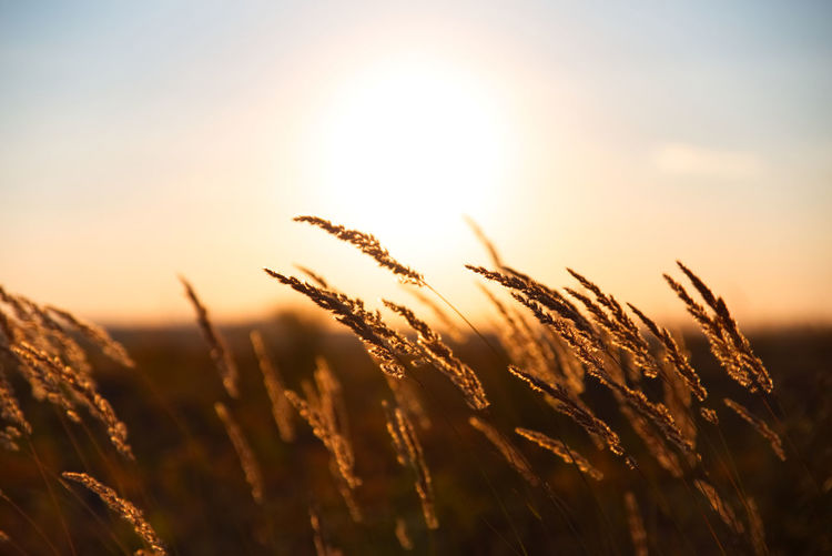 Close-up of stalks in field against bright sun