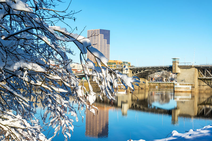 Snow covered branches in downtown Portland, Oregon with the Morrison Bridge Architecture City Downtown Ice Oregon Pacific Portland Portland, OR Reflection Riverside Tree Trees Willamette River  Winter Cold Colorful Infrastructure Northwest Park River Snow Urban Water Waterfront White