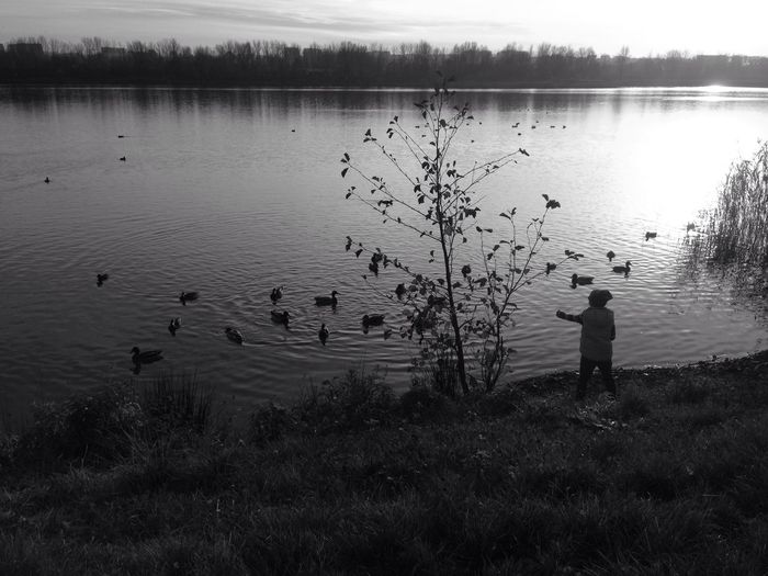 Lake Black And White Duck Enjoy The View