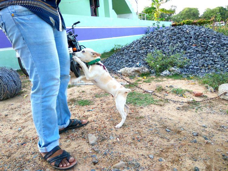 Puppy First Eyeem Photo