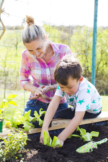 beautiful mother and her blond son planting salad in the raised bed in her garden Mother Nature Plant Salad Vegetarian Food Biology Boy Care Child Childhood Dirt Family Females Gardening Girls Growth Holding Leisure Activity Lifestyles Nature Outdoors Plant Planting Son Three Quarter Length Togetherness Vegan Vegetable Women