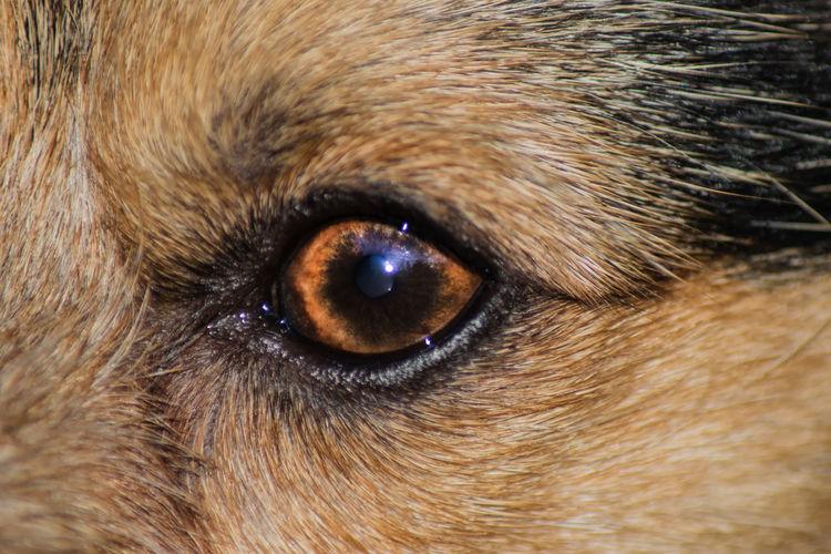 Animal Eye Animal Hair Animal Head  Animal Nose Animal Themes Close-up Domestic Animals Extreme Close Up Full Frame Looking Looking At Camera Mammal No People One Animal Pets Whisker