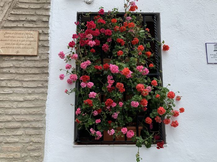 Pink flowering plants against wall