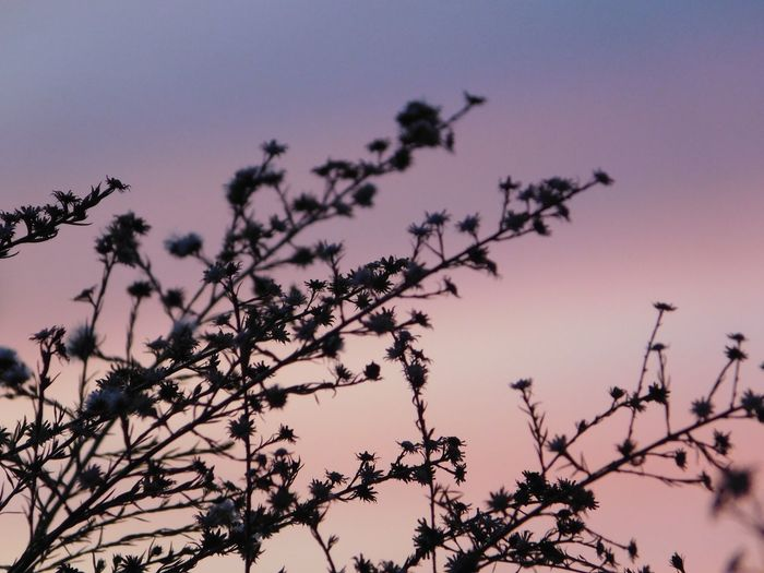 Sunset Nature Beauty In Nature Low Angle View Growth No People Outdoors Tree Branch Clear Sky Sky Flower Day Freshness Close-up